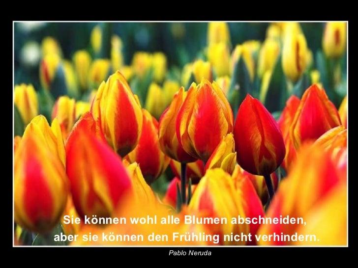 Sie können wohl alle Blumen abschneiden,aber sie können den Frühling nicht verhindern.                   Pablo Neruda