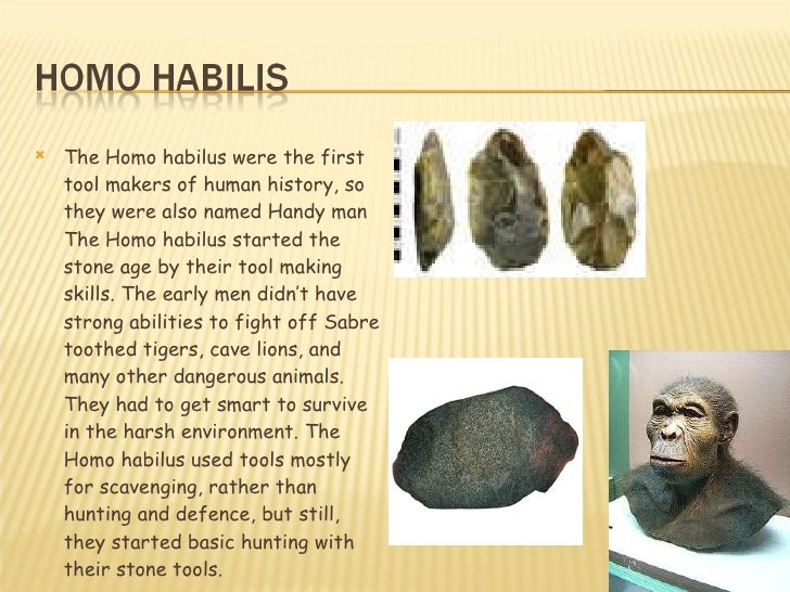 Natural Razor Sharp Stone Used By Cave Men
