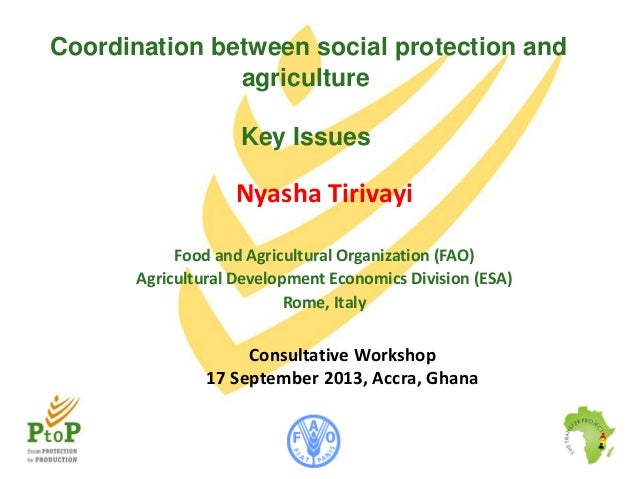 Coordination between social protection and agriculture Key Issues  Nyasha Tirivayi Food and Agricultural Organization (FAO...