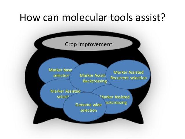 How can molecular tools assist?Marker basedselectionMarker AssistedselectionMarker AssistedBackcrossingMarker AssistedBack...