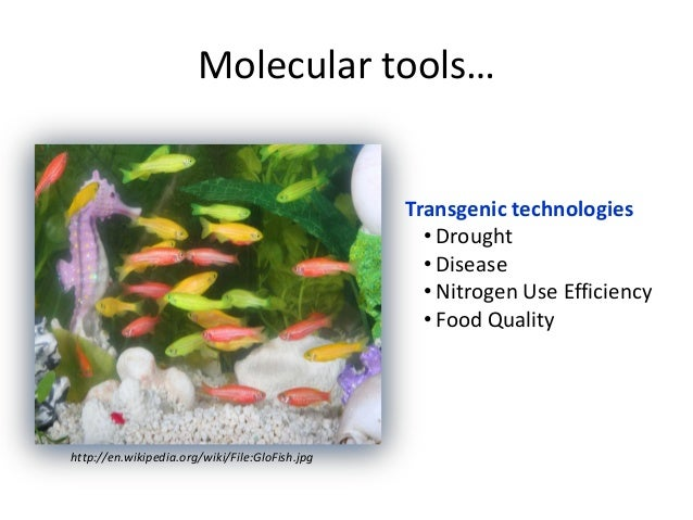 Molecular tools…http://en.wikipedia.org/wiki/File:GloFish.jpgTransgenic technologies• Drought• Disease• Nitrogen Use Effic...