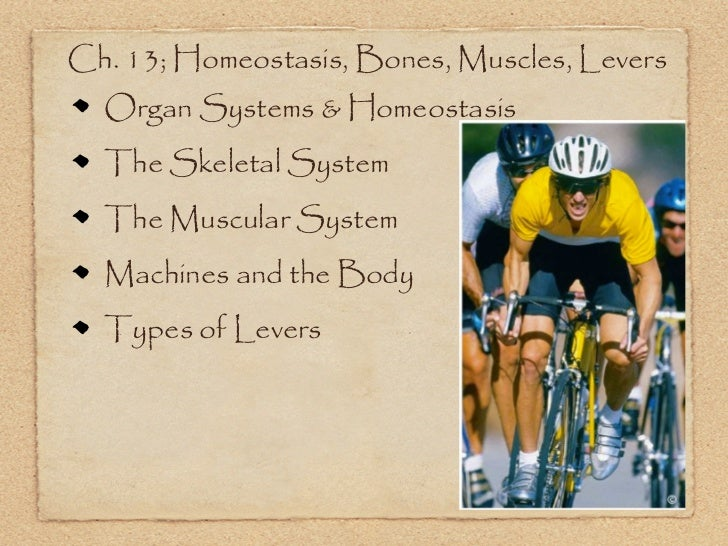 Ch. 13; Homeostasis, Bones, Muscles, Levers  Organ Systems & Homeostasis  The Skeletal System  The Muscular System  Machin...
