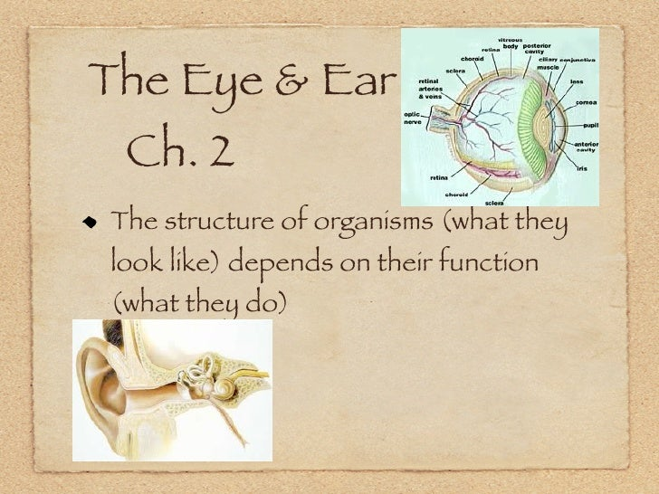 The Eye & Ear 	 Ch. 2  The structure of organisms (what they  look like) depends on their function  (what they do)