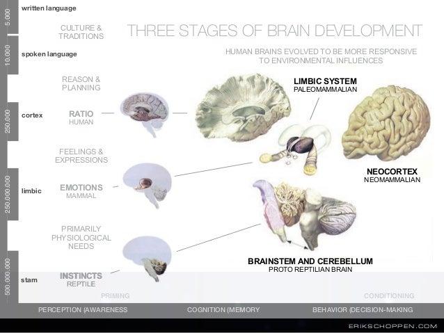 informatie wordt kort opgeslagen voor direct gebruik FRONTAAL KWAB written language spoken language cortex limbic stam NEO...