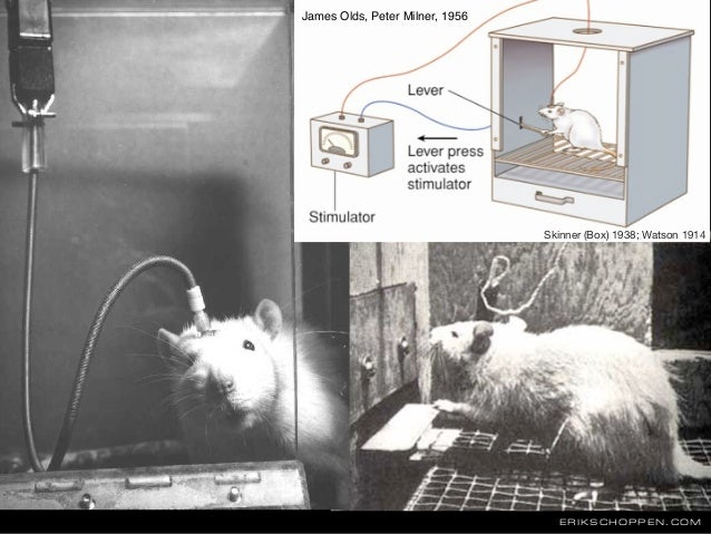 ERIKSCHOPPEN.COM James Olds, Peter Milner, 1956 Skinner (Box) 1938; Watson 1914
