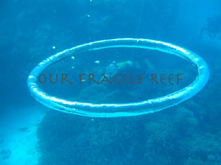 Our Fragile Reef