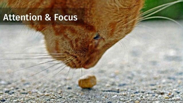 Attention & Focus https://www.flickr.com/photos/77654185@N07/8428225936