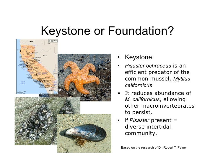 keystone species Report on identification of keystone species and processes across regional seas wp 6 deliverable 61 lead contractor hellenic centre for marine research authors.