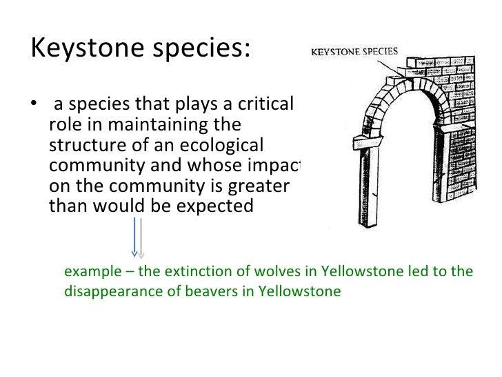 keystone species essay