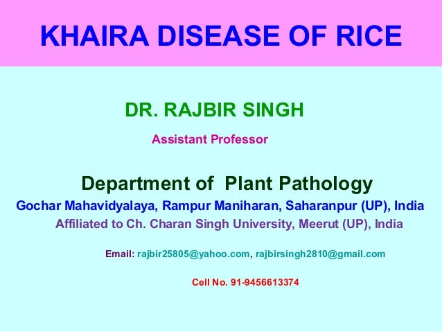 KHAIRA DISEASE OF RICE DR. RAJBIR SINGH Assistant Professor Department of Plant Pathology Gochar Mahavidyalaya, Rampur Man...