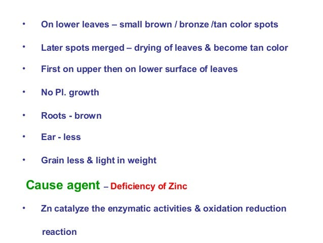 • On lower leaves – small brown / bronze /tan color spots • Later spots merged – drying of leaves & become tan color • Fir...