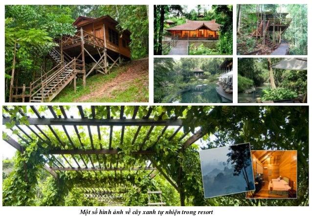 Một số hình ảnh về cây xanh tự nhiện trong resort