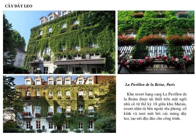 CÂY DÂY LEO La Pavillon de la Reine, Paris Khu resort hạng sang La Pavillon de la Reine được tái thiết trên một ngôi nhà c...