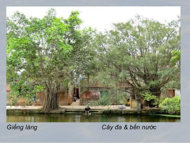 Giếng làng Cây đa & bến nước