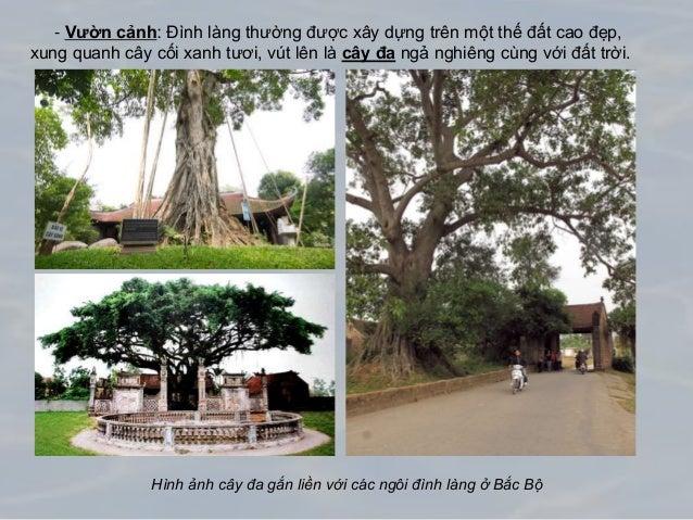 - Vườn cảnh: Đình làng thường được xây dựng trên một thế đất cao đẹp, xung quanh cây cối xanh tươi, vút lên là cây đa ngả ...