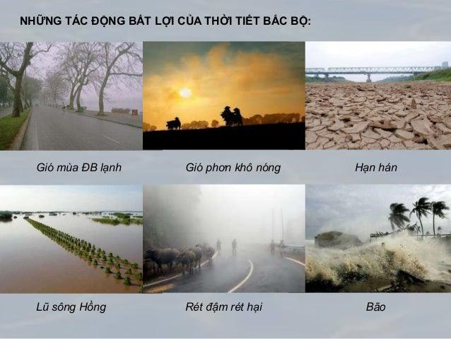 NHỮNG TÁC ĐỘNG BẤT LỢI CỦA THỜI TIẾT BẮC BỘ: Gió mùa ĐB lạnh Gió phơn khô nóng Hạn hán Lũ sông Hồng Rét đậm rét hại Bão