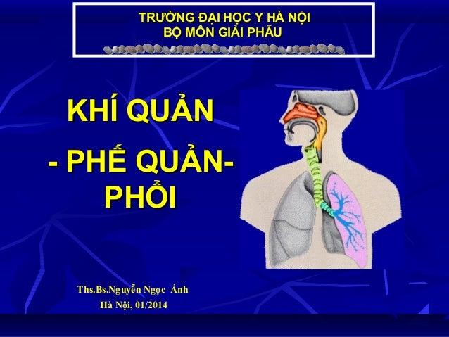 TRƯỜNG ĐẠI HỌC Y HÀ NỘI BỘ MÔN GIẢI PHẪU  KHÍ QUẢN - PHẾ QUẢNPHỔI Ths.Bs.Nguyễn Ngọc Ánh Hà Nội, 01/2014
