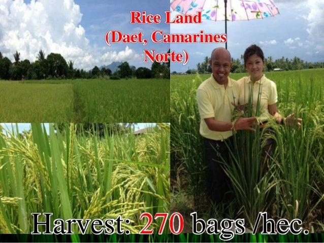 rice farming utilizing powergrow organic foliar J-777 foliar organic fertilizer 1,030 likes 4 talking about this organic farming in the philippines rice protocol with j-777 organic foliar fertilizer.