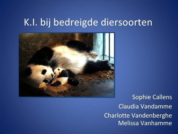 K.I. bij bedreigde diersoorten Sophie Callens Claudia Vandamme Charlotte Vandenberghe Melissa Vanhamme