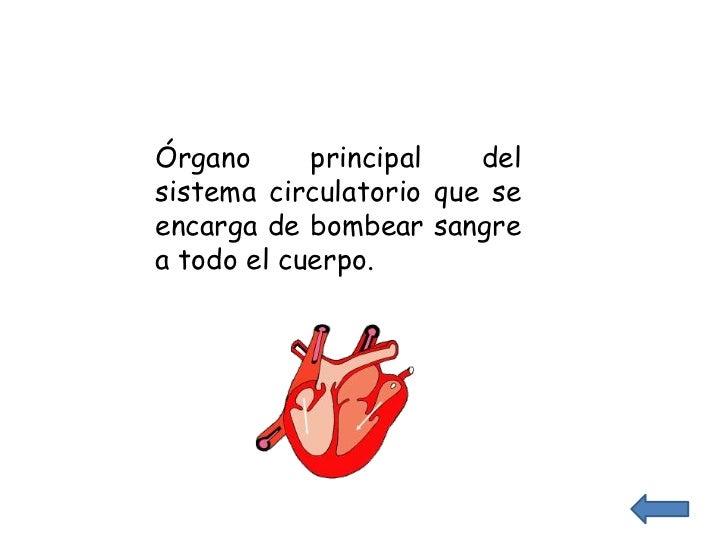 Órgano      principal   delsistema circulatorio que seencarga de bombear sangrea todo el cuerpo.