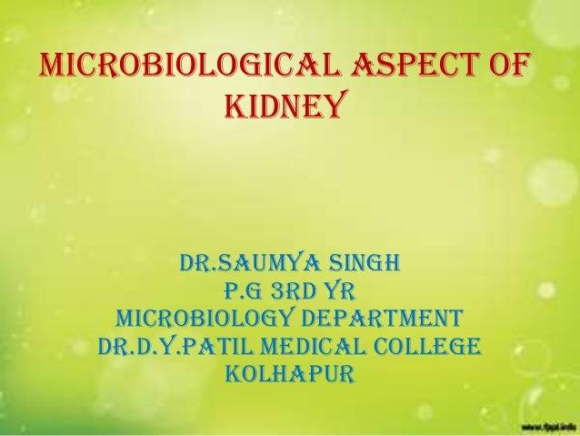 MICROBIOLOGICAL ASPECT OF kidney  DR.SAUMYA SINGH P.G 3rd YR MICROBIOLOGY Department dr.d.y.patil medical college kolhapur