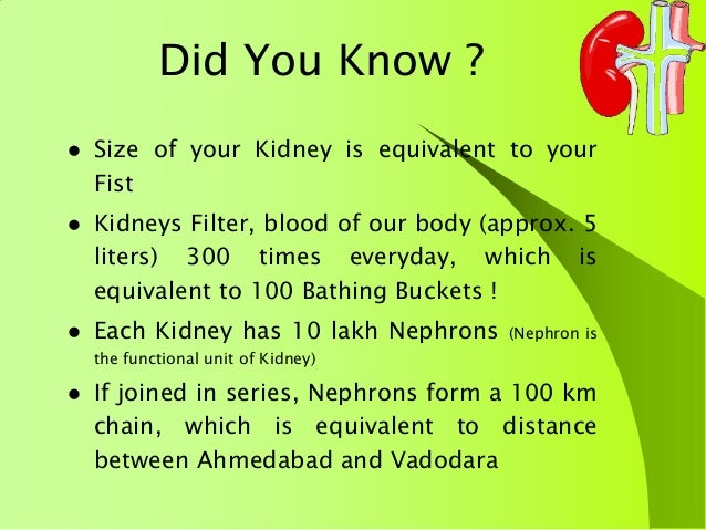 do you know about your kidney?, Human Body