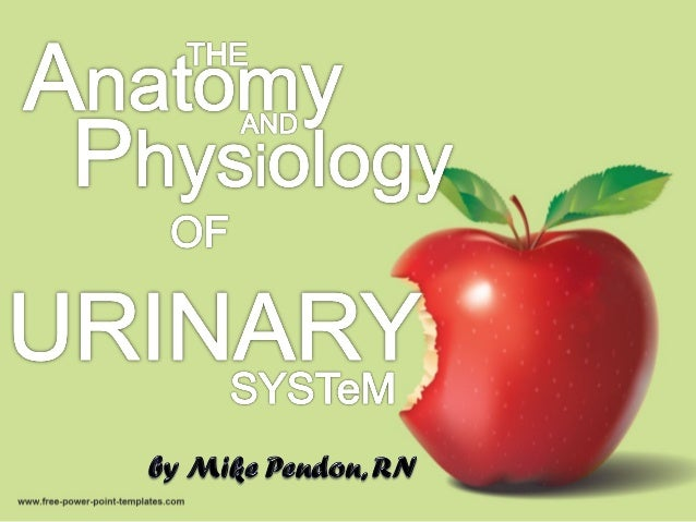 Anatomic and Physiologic Overview The urinary system comprises the kidneys, ureters, bladder, and urethra. A thorough unde...