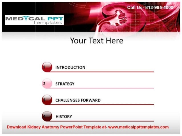 Kidney anatomy powerpoint template kidney anatomy powerpoint template at medica ppttemplates com 3 toneelgroepblik Choice Image