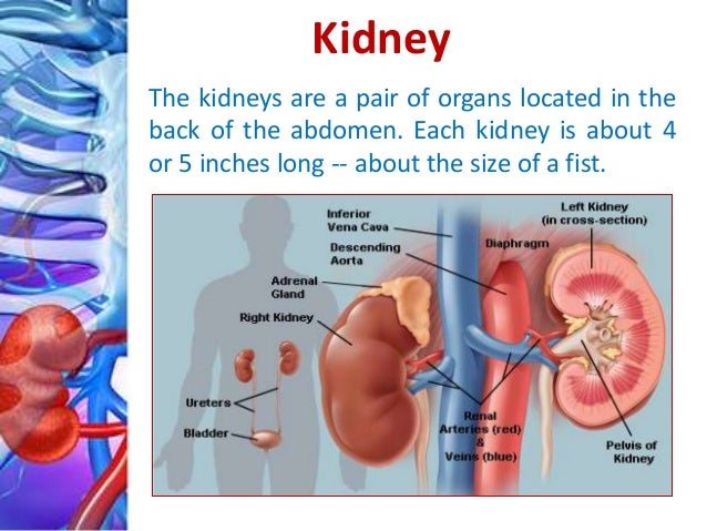 the process of kidney transplant Treatments for kidney failure are hemodialysis, a mechanical process to clean the blood of waste products peritoneal dialysis, in which toxins are removed by passing chemical solutions through the abdomen and kidney transplant.