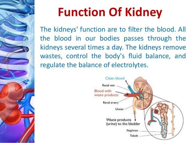 kidney transplant surgery procedure, Cephalic Vein