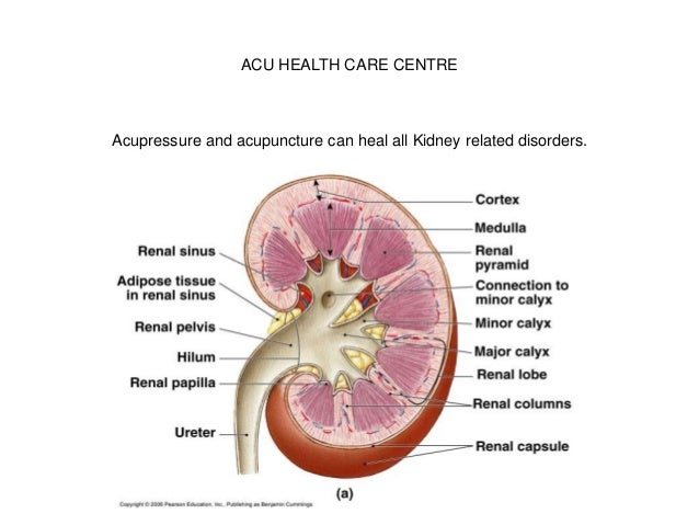 ACU HEALTH CARE CENTRE Acupressure and acupuncture can heal all Kidney related disorders.