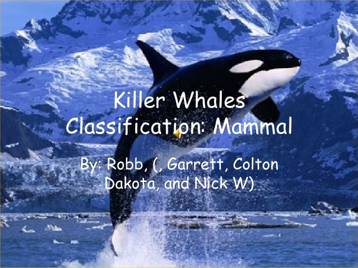 Killer Whales Classification: Mammal By: Robb, (, Garrett, Colton Dakota, and Nick W)