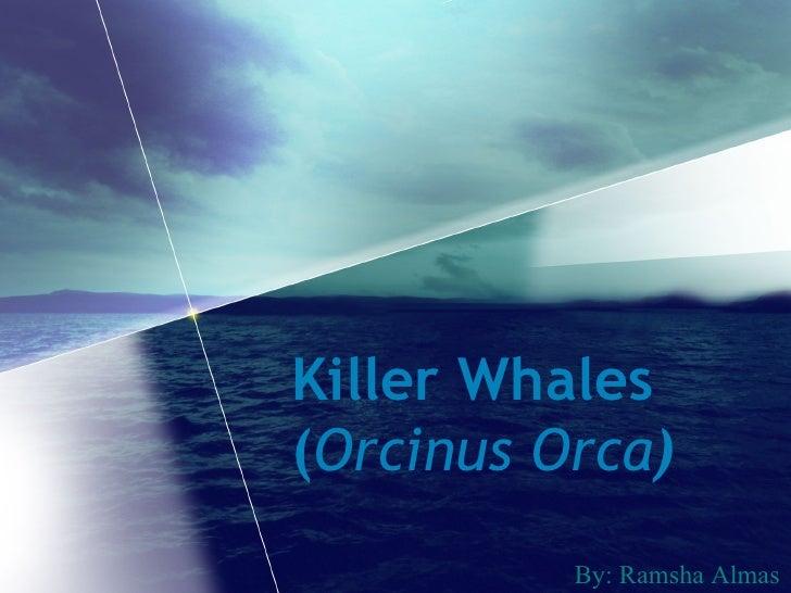 Killer Whales ( Orcinus Orca ) By: Ramsha Almas