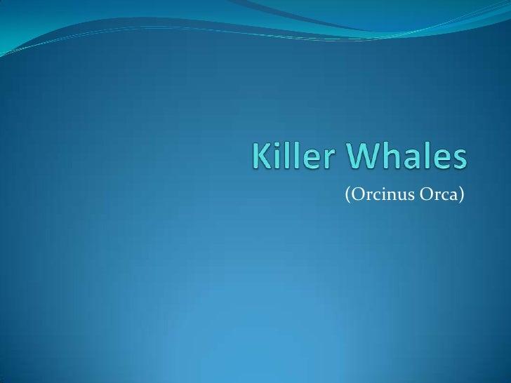 (Orcinus Orca)
