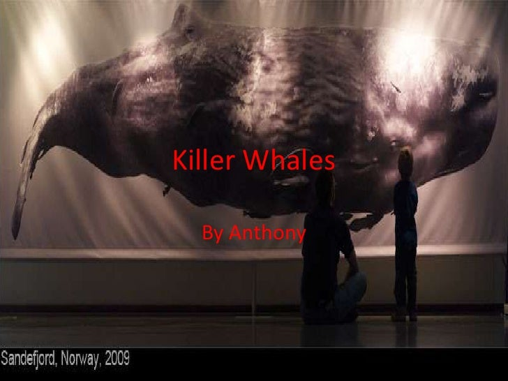 Killer Whales<br />By Anthony<br />