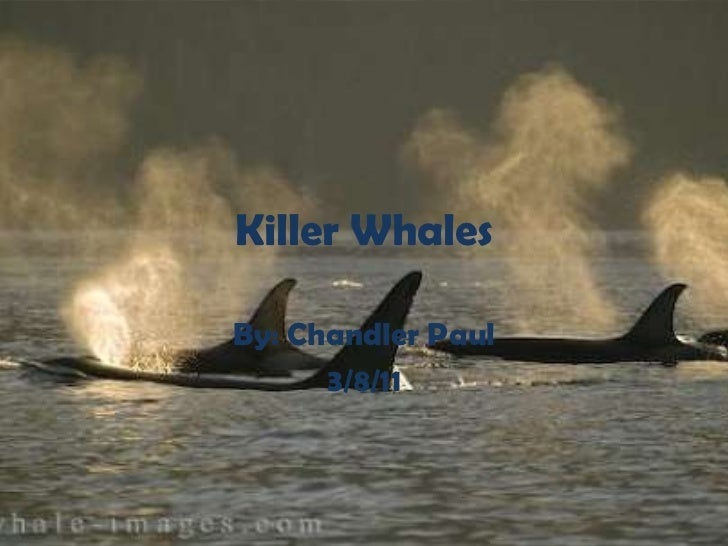 Killer Whales<br />By: Chandler Paul <br />3/8/11<br />