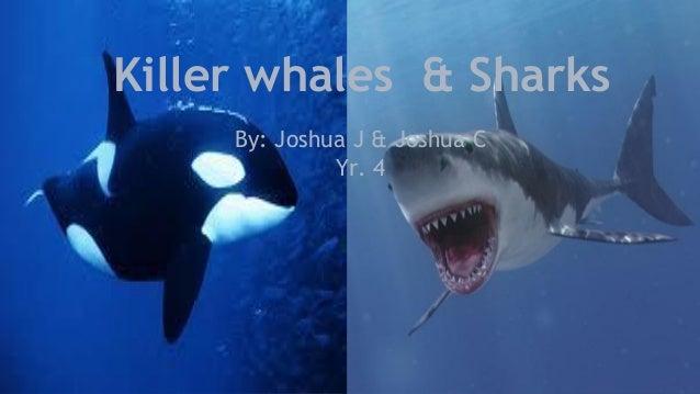 Killer whales & Sharks By: Joshua J & Joshua C Yr. 4