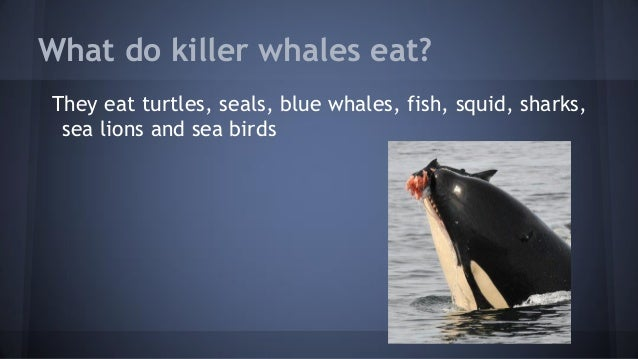Killer Whales And Sharks 1 275