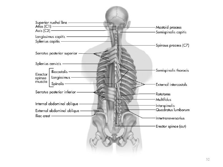 Kin191 A10 Lumbar Thoracic Anatomy