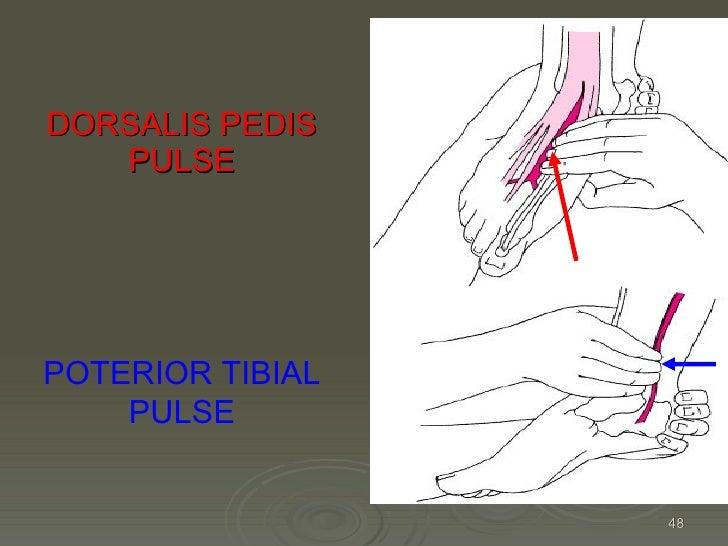Kin191 A. Ch.4. Foot. Toes. Anatomy. Fall 2007