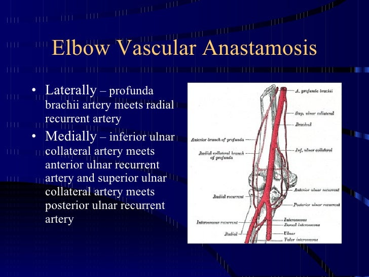 Kin 191 B Elbow And Forearm Anatomy And Evaluation