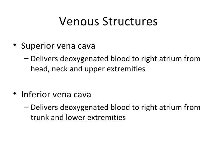 Kin 191 B Abdomen And Thorax Anatomy And Evaluation