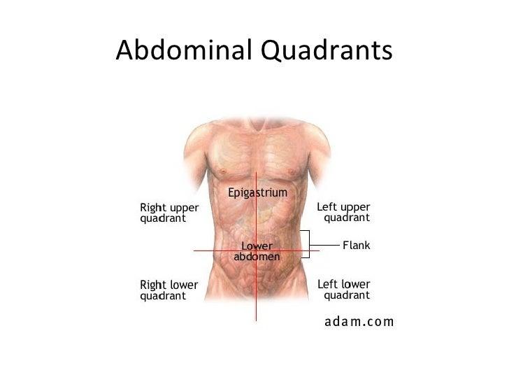 Attractive Upper Left Quadrant Anatomy Model - Anatomy And ...