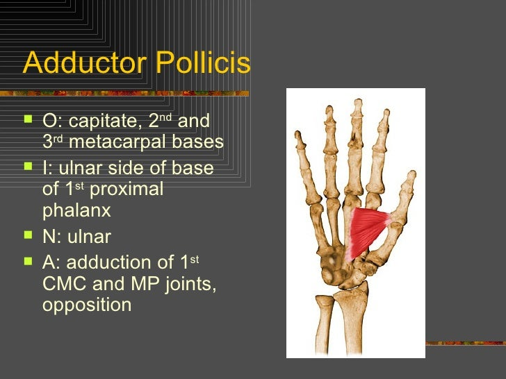 Kin 191 B – Wrist, Hand And Finger Anatomy