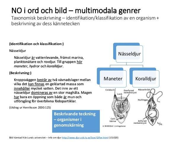 NO i ord och bild – multimodala genrer Taxonomisk beskrivning – identifikation/klassifikation av en organism + beskrivning...