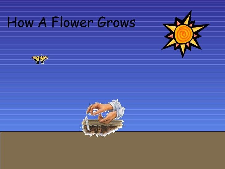 How A   Flower   Grows