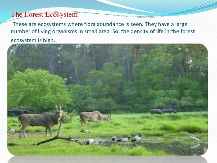 Kinds of ecosystem