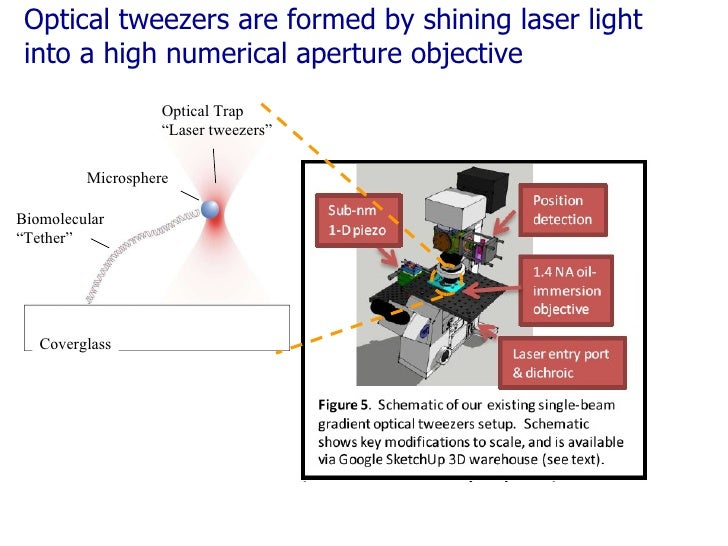 """Optical tweezers are formed by shining laser light into a high numerical aperture objective Optical Trap """" Laser tweezers""""..."""