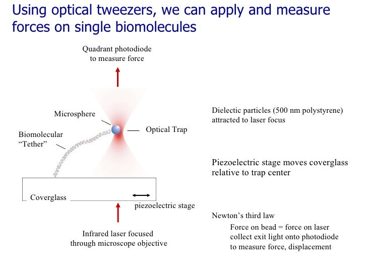 <ul><li>Piezoelectric stage moves coverglass relative to trap center </li></ul>Using optical tweezers, we can apply and me...