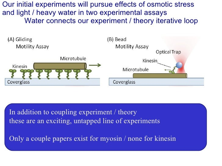 Our initial experiments will pursue effects of osmotic stress and light / heavy water in two experimental assays Water con...